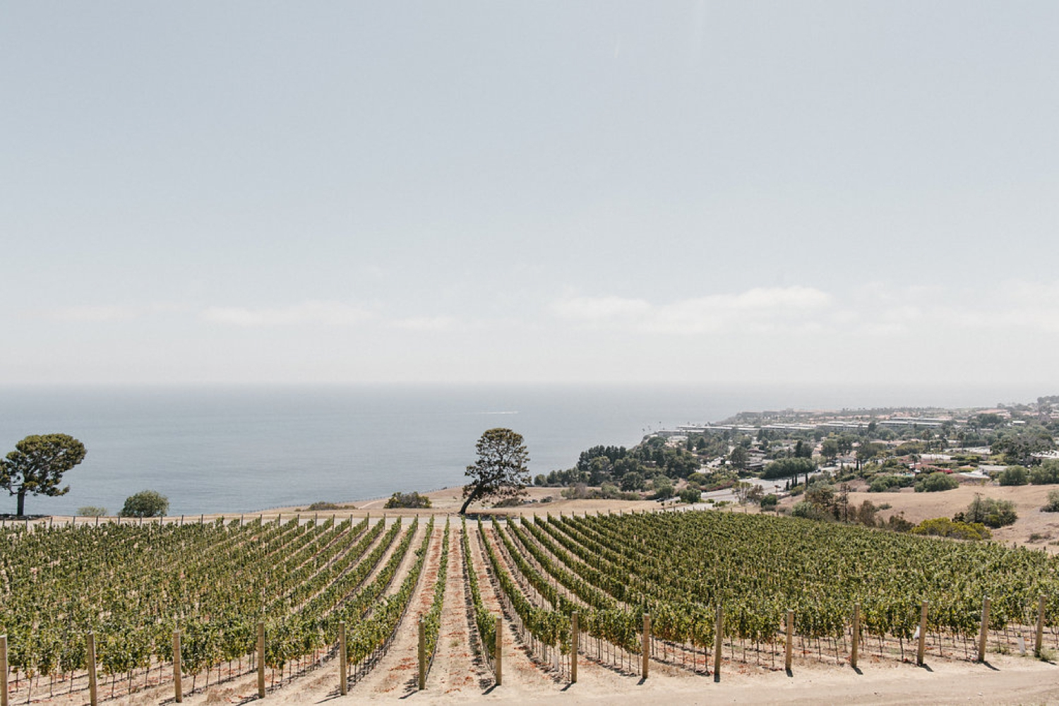 LVL Weddings and Events Catalina View Gardens